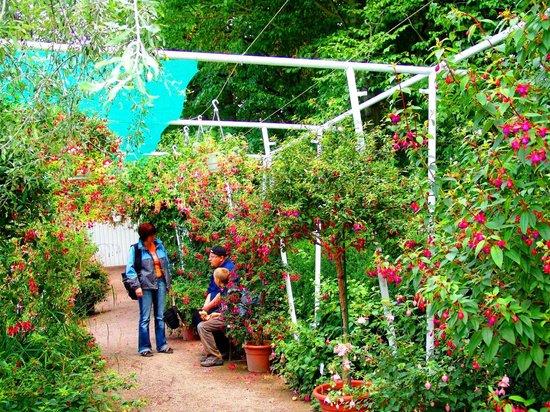 Egapark2013sep picture of ega cyriaksburg erfurt for Garten in erfurt