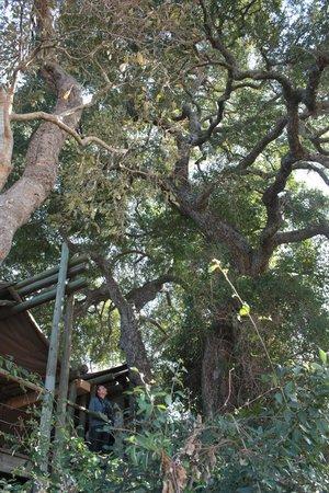 Tamboti Satellite Camp: View on the terrace