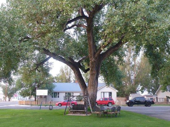 Greybull Motel: giardino al centro del parcheggio antistante le camere