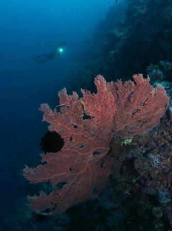 Lissenung Island Resort : Colourful sealife