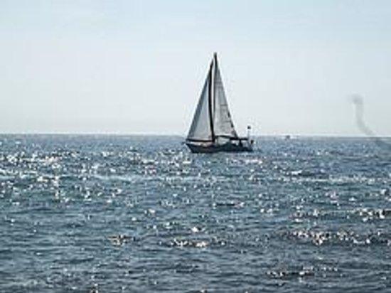 Snug Harbor Resort : Sailboat on Lake Michigan