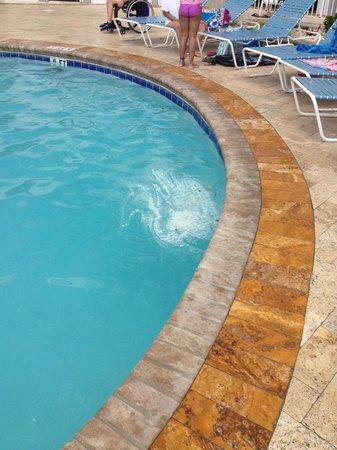 Sea Watch Resort : Fithy pool