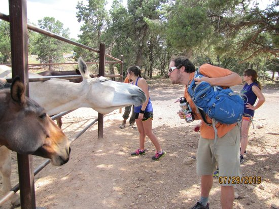 Bright Angel Bike Rentals and Tours: Interacting with the Pack Mules at one of our stops