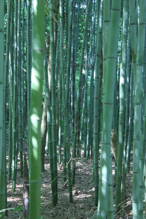 Leaming's Run Gardens: bamboo forest