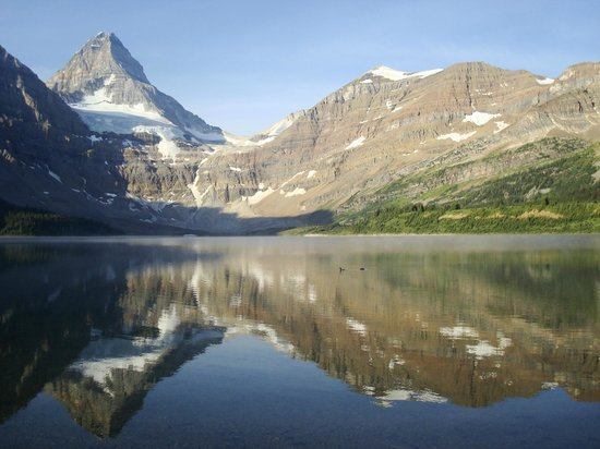 Assiniboine Lodge: Mt Assiniboine, Lake Magog and 2 loons - heaven
