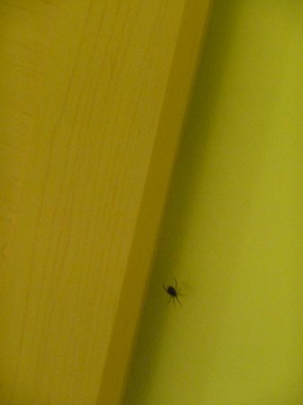 Margaree Riverview Inn: Spider by the bed more than one was found