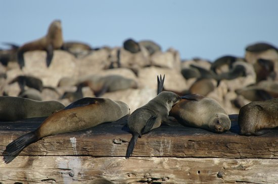 Dyer Island Cruises: seals resting on wreck