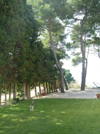 Clos Sainte Magdeleine : LUCKY DOG!!!!!!! I am jealous ;-)