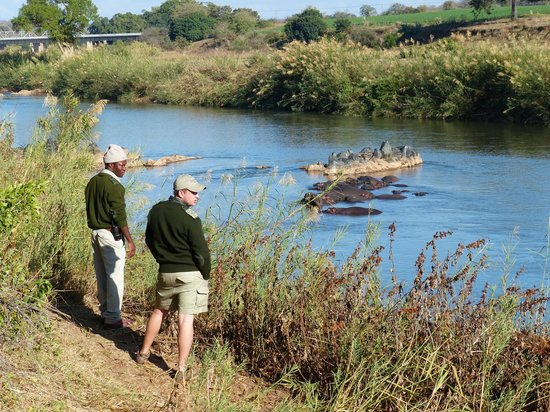 Sausage Tree Safari Camp : olifants river