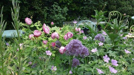 At Home London B&B: Rosa's Rose Garden