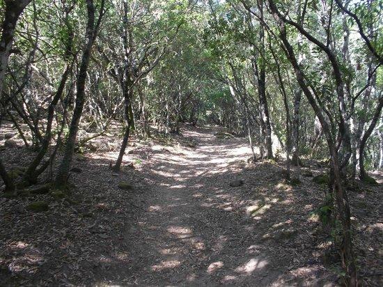 Mitza Fanebas: sentiero