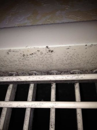 Renaissance Tulsa Hotel & Convention Center: Mold or Mildew?  And the debate rages....