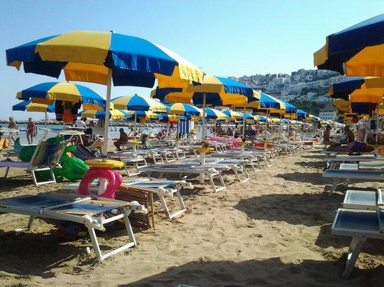 Villaggio Camping Bellariva: ..ombrelloni