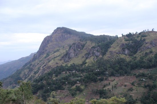 Green Hill : View of Ella Rock