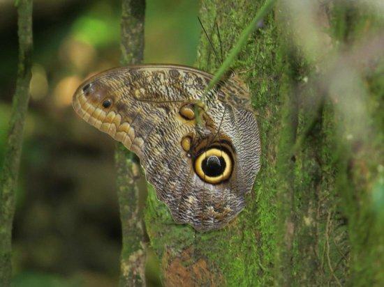 Playa Nicuesa Rainforest Lodge: Walking the grounds