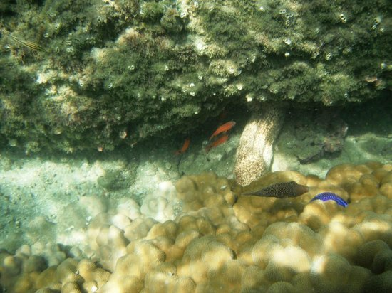 Playa Nicuesa Rainforest Lodge: Snorkelling