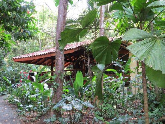 Playa Nicuesa Rainforest Lodge: Home away from home