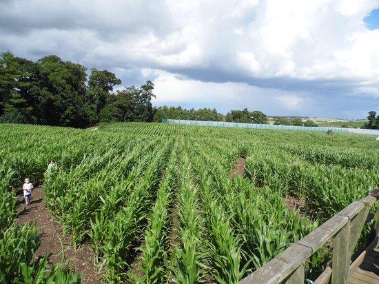 Cairnie Fruit Farm & Mega Maze
