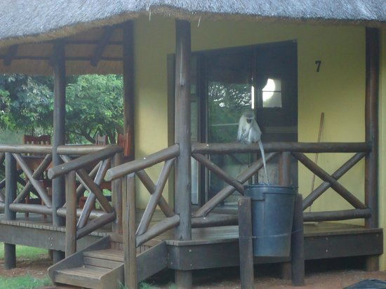 Ndumo Rest Camp: The chalet's front terrace and a naughty monkey