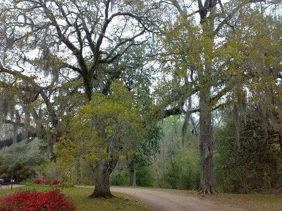 Longwood : Park