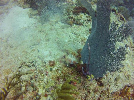 Dive picture of planet scuba mexico puerto aventuras for Dive planet