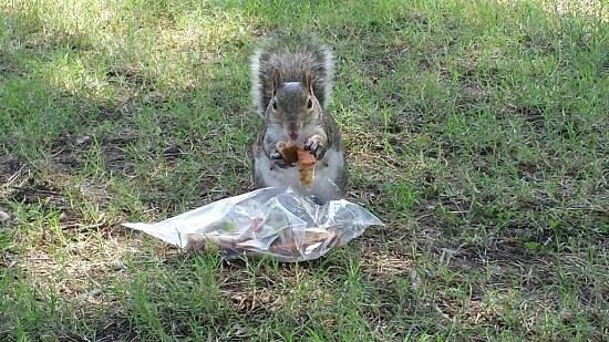 Tulsa Zoo : free lunch!!