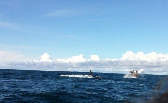 Panama Yacht  Adventures Day Tours: Ballenas Excelente!