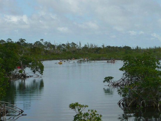 Ocean Reef Yacht Club & Resort: Lucaya National Park mangroves