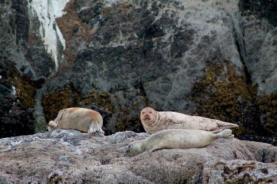 Bandon Beach Motel: Family of seals