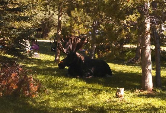 Elk Creek Campground and RV Park: Moose on the property
