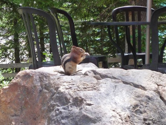 Moraine Lake Lodge: squirrel munching on leftovers