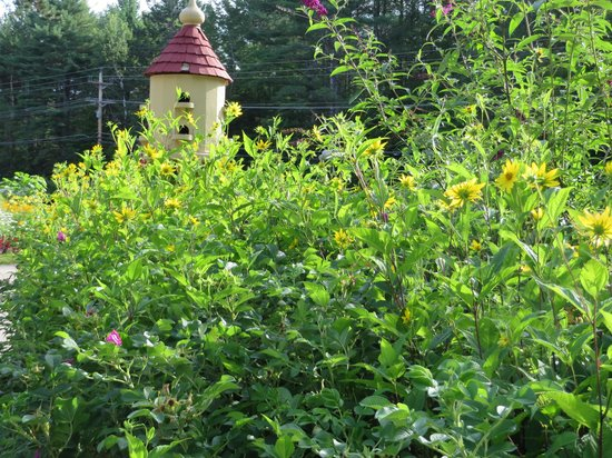Bernerhof Inn Bed and Breakfast: The flora
