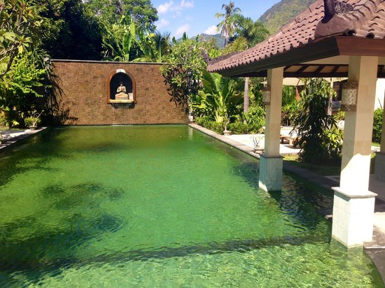 Golden Buddha Cottages : Green swiming pool
