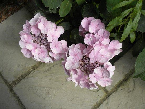 Milton at Gatwick: Flowers