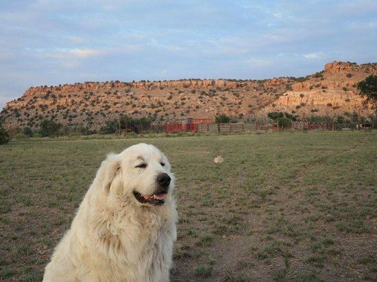 Black Mesa Bed & Breakfast: Out for a walk