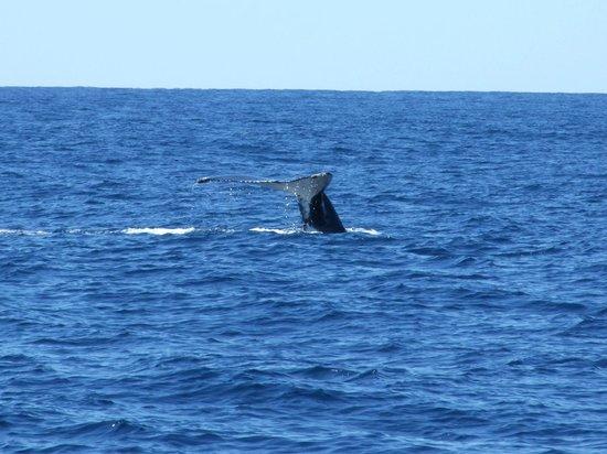 Sea World Whale Watch: Tail wave :)