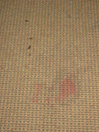 Motel 6 Clackamas: Carpet stains