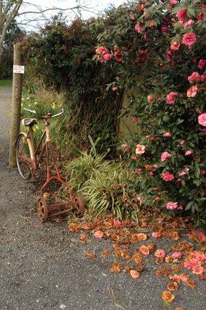 Woodturners Cafe: Novel lawn mower