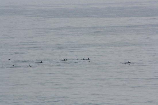 أتلانتك أوشنفرنت إن: Dolphins seen from the balcony.
