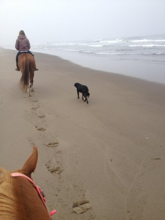 Green Acres Equestrian Center: Beach riding