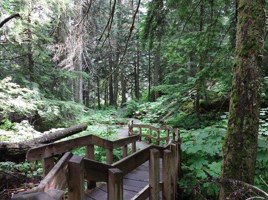 Giant Cedars Boardwalk Trail : pic 1