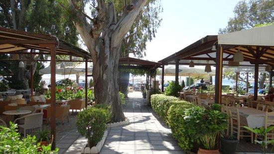 Ibiskos Cafe and Restaurant: Ibiskos gardens