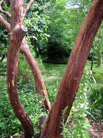 Highdown Gardens: Lovely bark