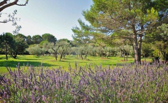 Mas de Val Ample : L'oliveraie