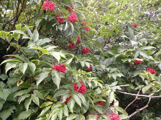 Kodiak Adventures Lodge - Larry Carroll: lots of flowers and wildlife outside the lodge