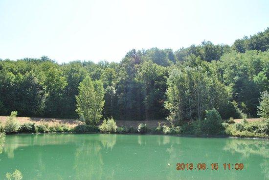 Villa il Cedro: entorno