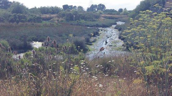 Arcata Marsh and Wildlife Sanctuary: Late afternoon sun