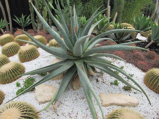 Terra Botanica : plante extreme