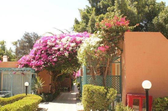 Giftun Azur Resort: Außengelände zwischen den einzelnen Bungalows