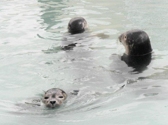 Natureland Seal Sanctuary: Baby seals were amazing :)